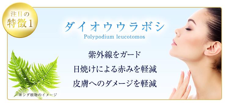 ダイオウウラボシ(Polypodium leucotomos)